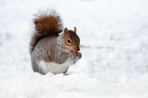 mókus.kicsi